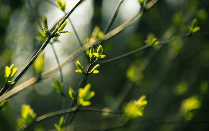 Spring 2020 Newsletter - Woodco